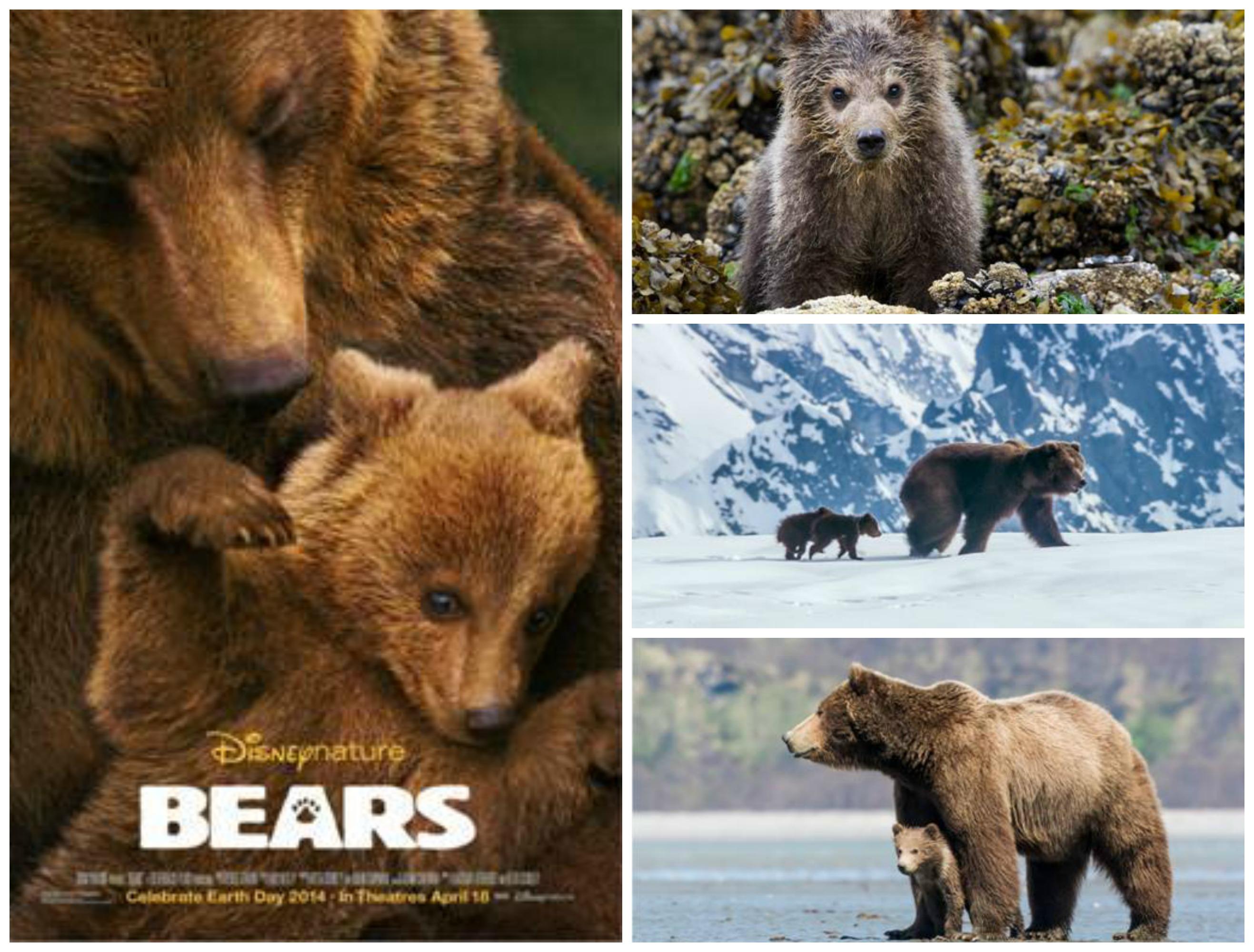[Image: bears.png]