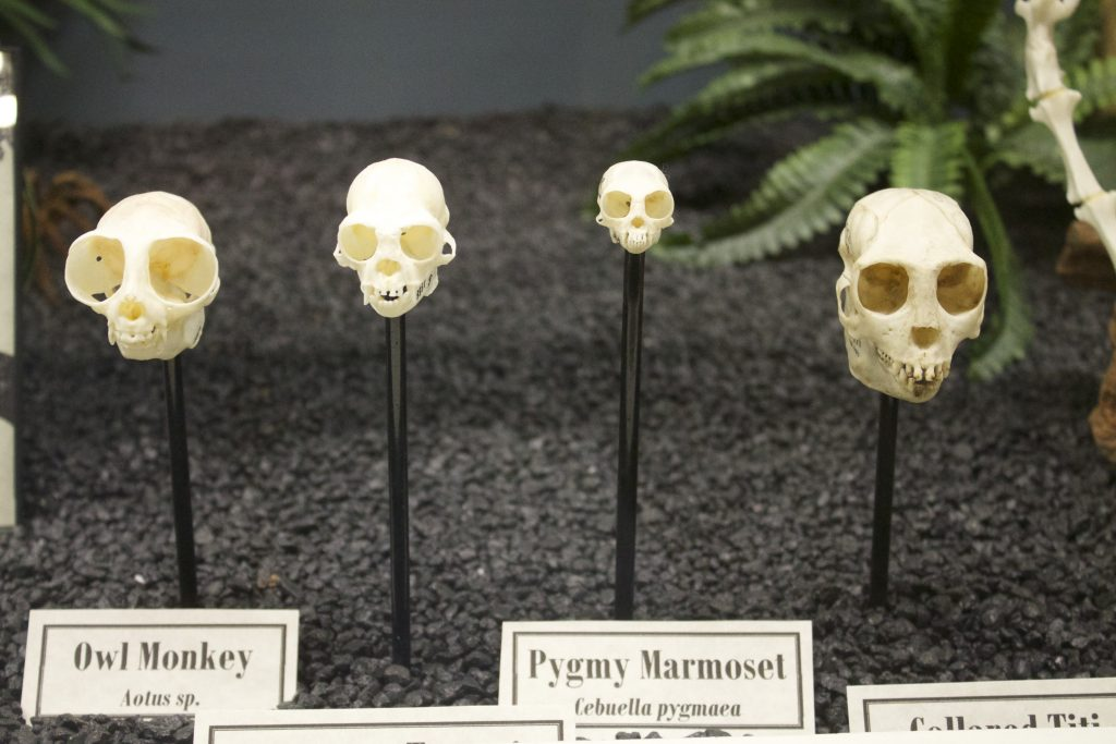 things to do in Oklahoma City-Museum of Bones