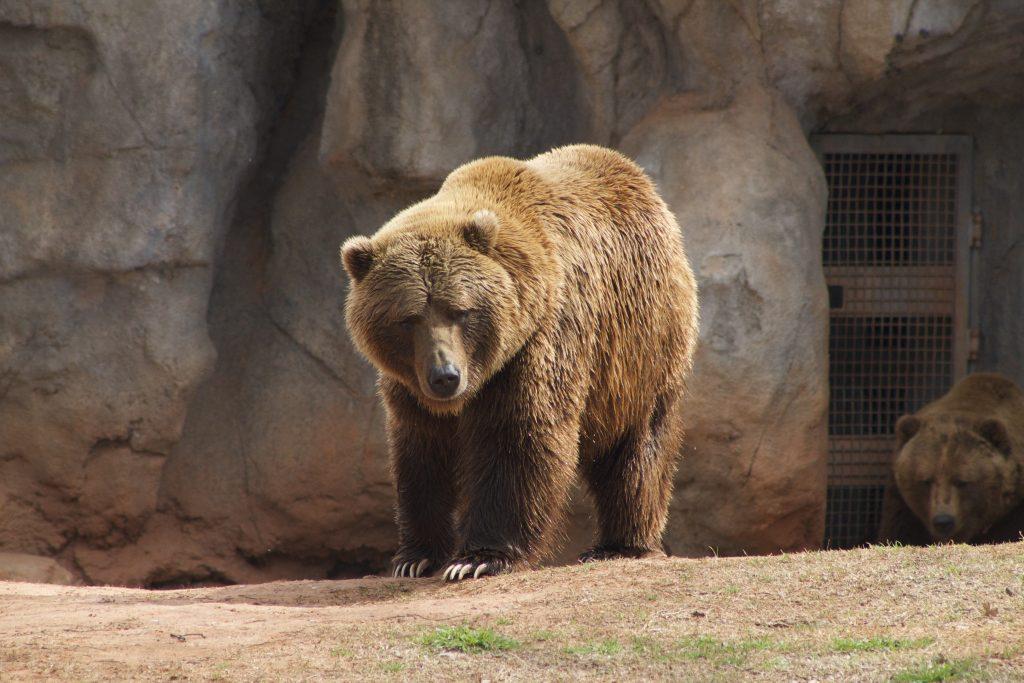 things to do in Oklahoma City-Brown Bear OKC Zoo