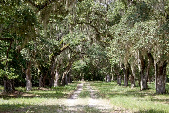 plantation pictures