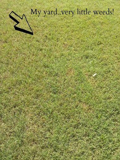 neighborhood lawn service