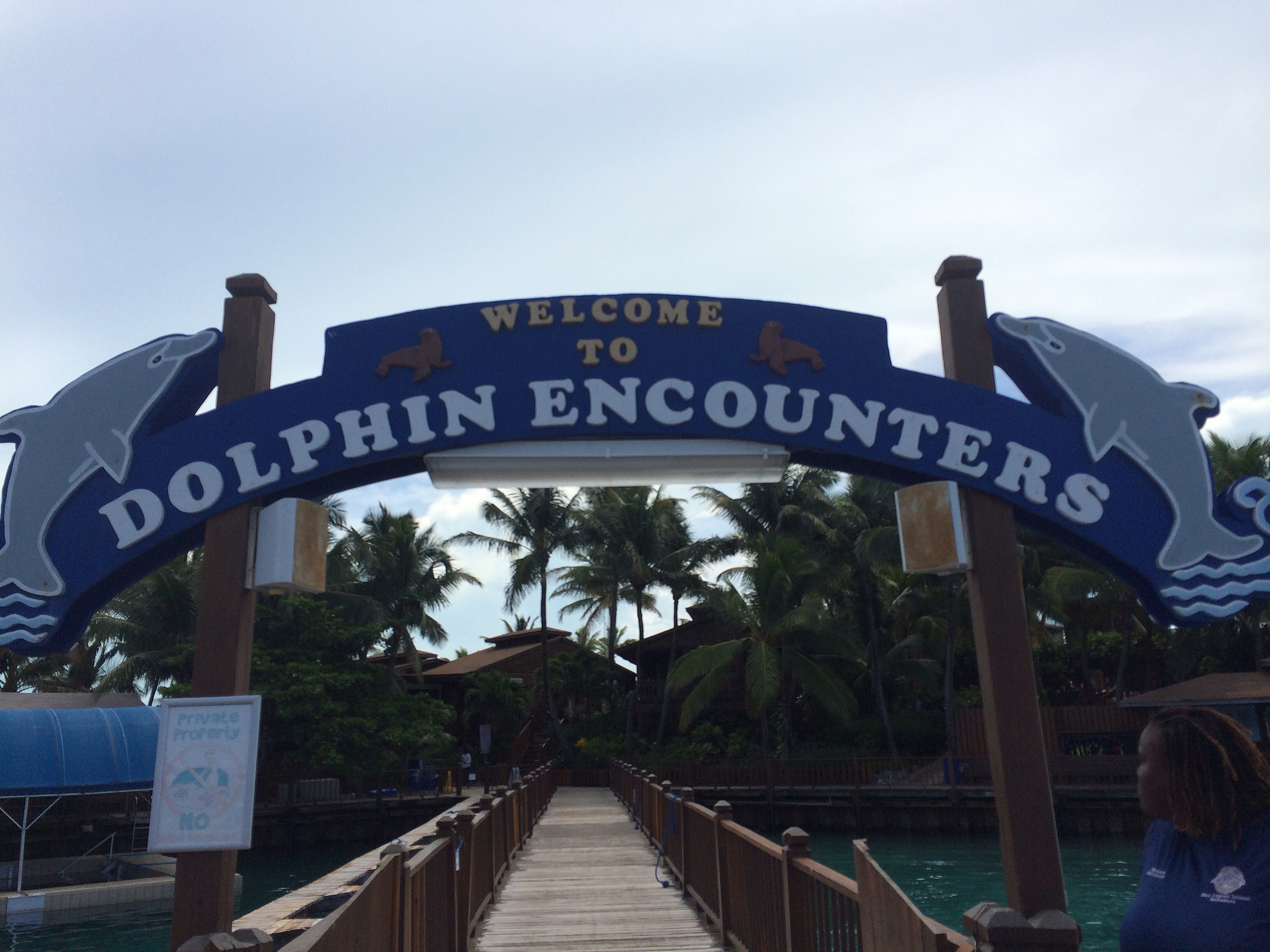blue lagoon island-dolphin excursion