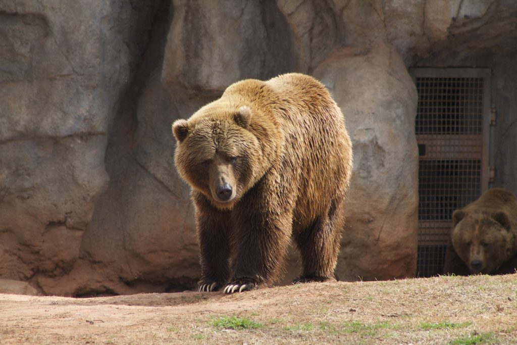 things to do in Oklahoma City-Brown Bear OKC Zoo