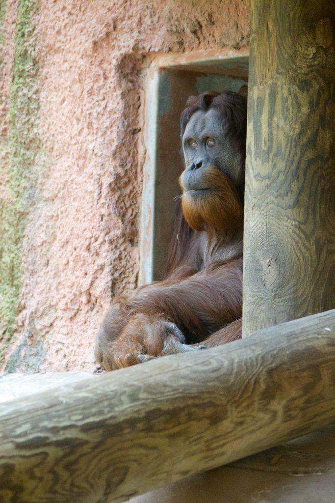 things to do in Oklahoma City-OKC Zoo