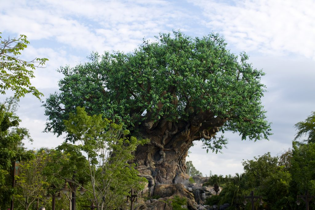 what is the wilderness explorers at Animal Kingdom
