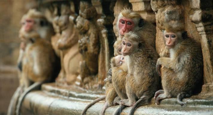 monkey kingdom event pictures