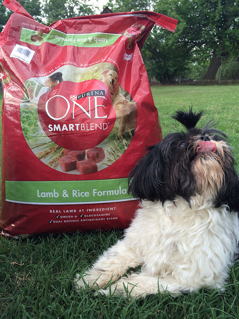 Purina One Challenge