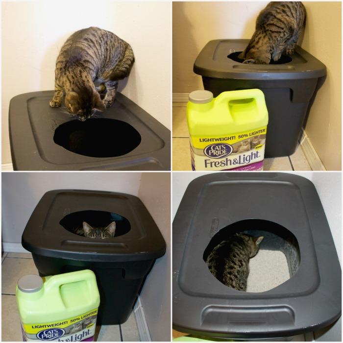 eric andre cat burglar