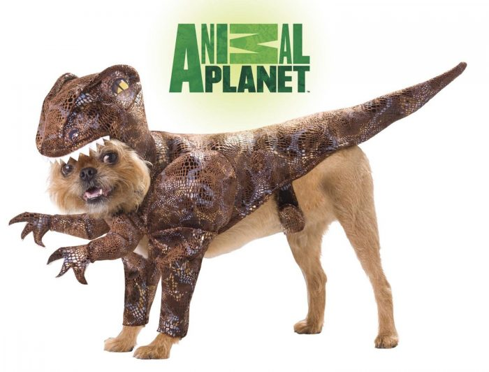 Funny Dinosaur Costume For Dogs