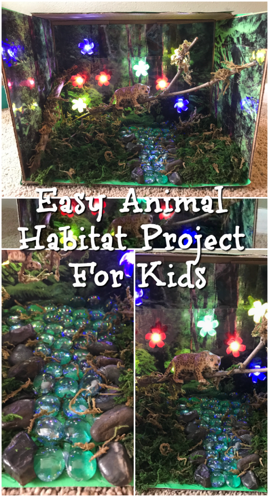 Easy Animal Habitat Project For Kids